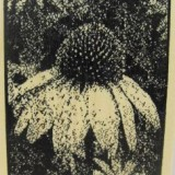 Outlines Rubber Stamp – H194 Cornflower Large – out of stock