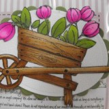 Mini Magnolia – Tulip Wheelbarrow