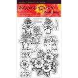 Power Poppy PFEB1501 Potted Primroses