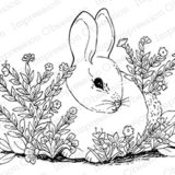 Impression Obsession – H16283 Garden Bunny