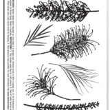 Darkroom Door – DDRS189 – Grevilleas Stamp Set