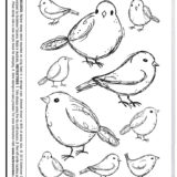 Darkroom Door – DDRS190 – Garden Birds Stamp Set