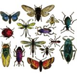 Sizzix / Tim Holtz – 663068  Entomology die set – out of stock