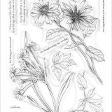 Altenew – Wild Flora stamp set